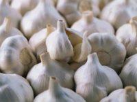 Причины измельчения озимого чеснока и методы их устранения