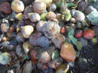 Особенности применения компоста
